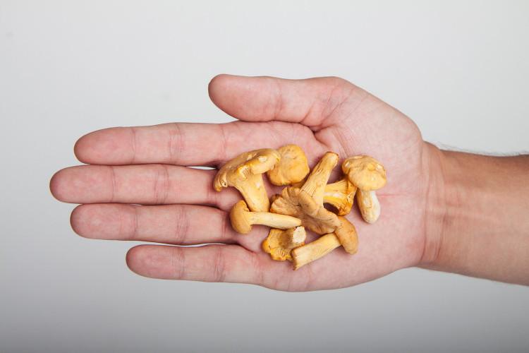Kurka grzyb – pieprznik jadalny – Jak wyglądają?