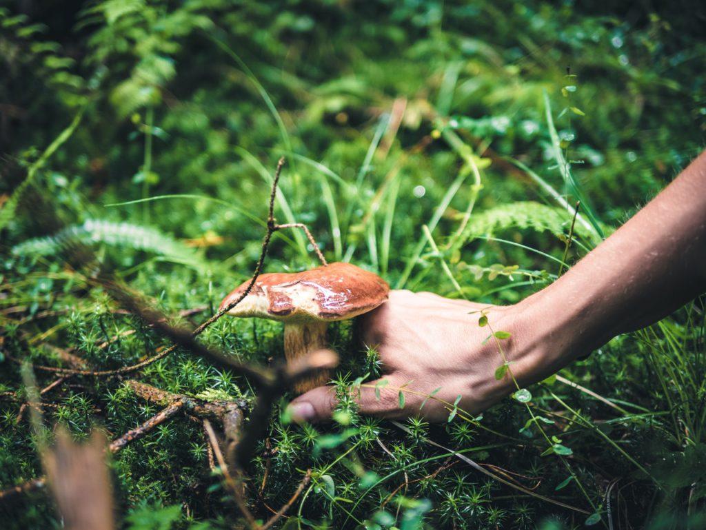Sezonowość grzybów