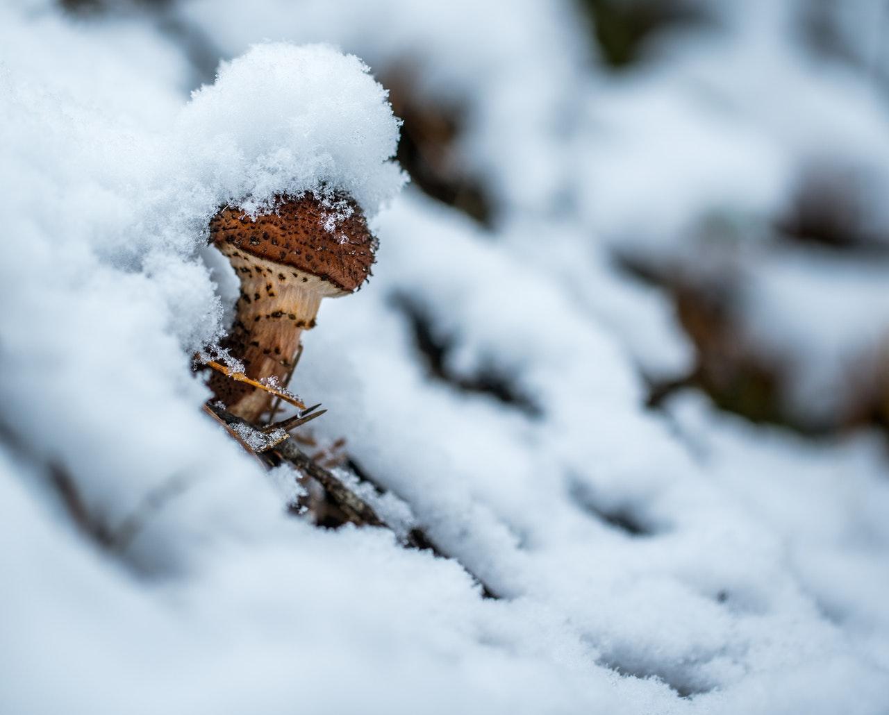jakie grzyba rosną zimą
