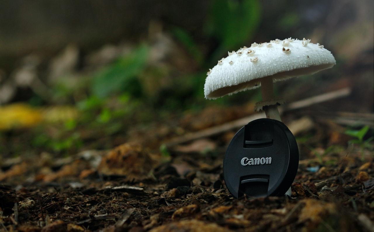 jak fotografować grzyby