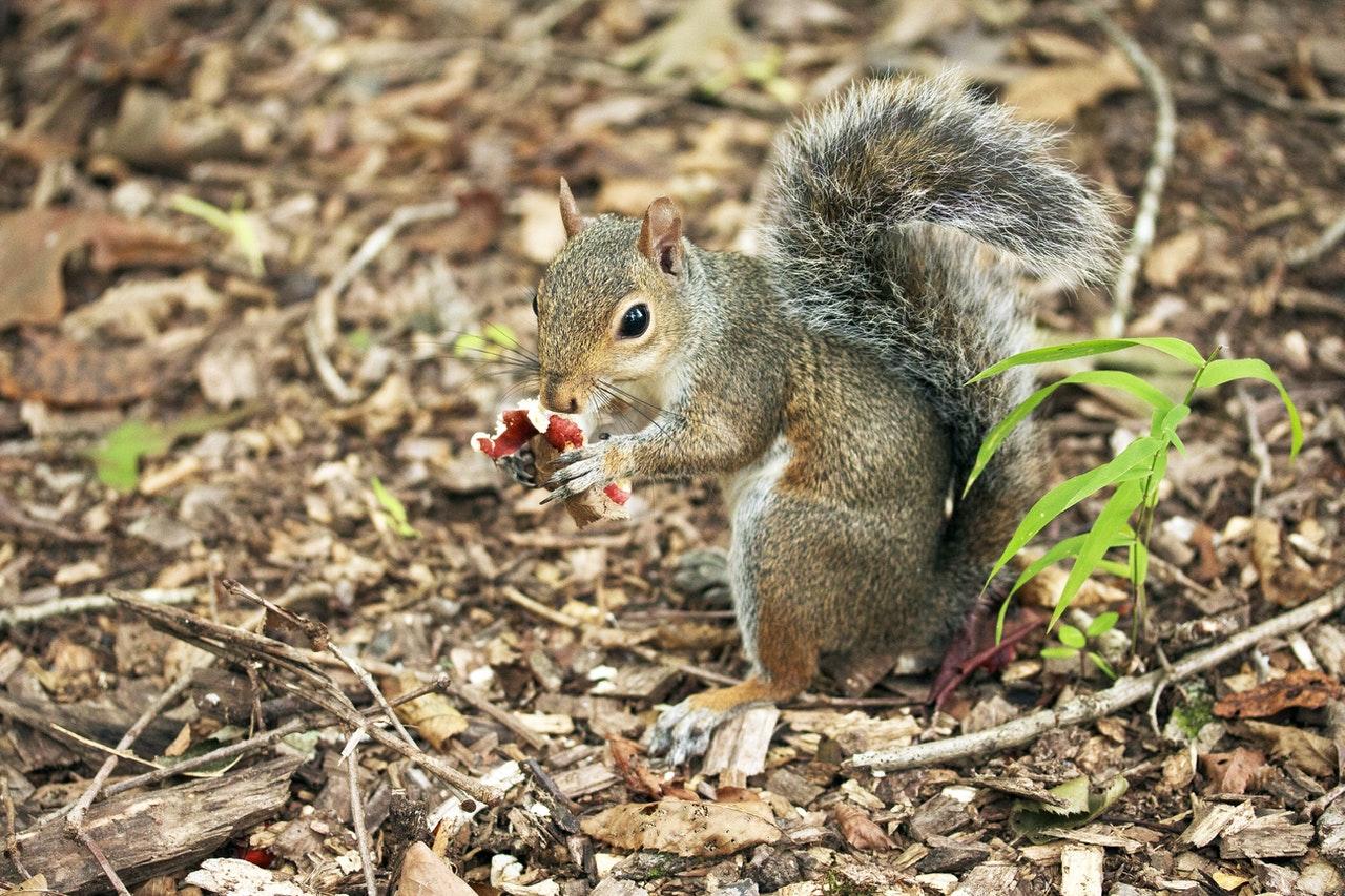 jakie zwierzęta jedzą grzyby